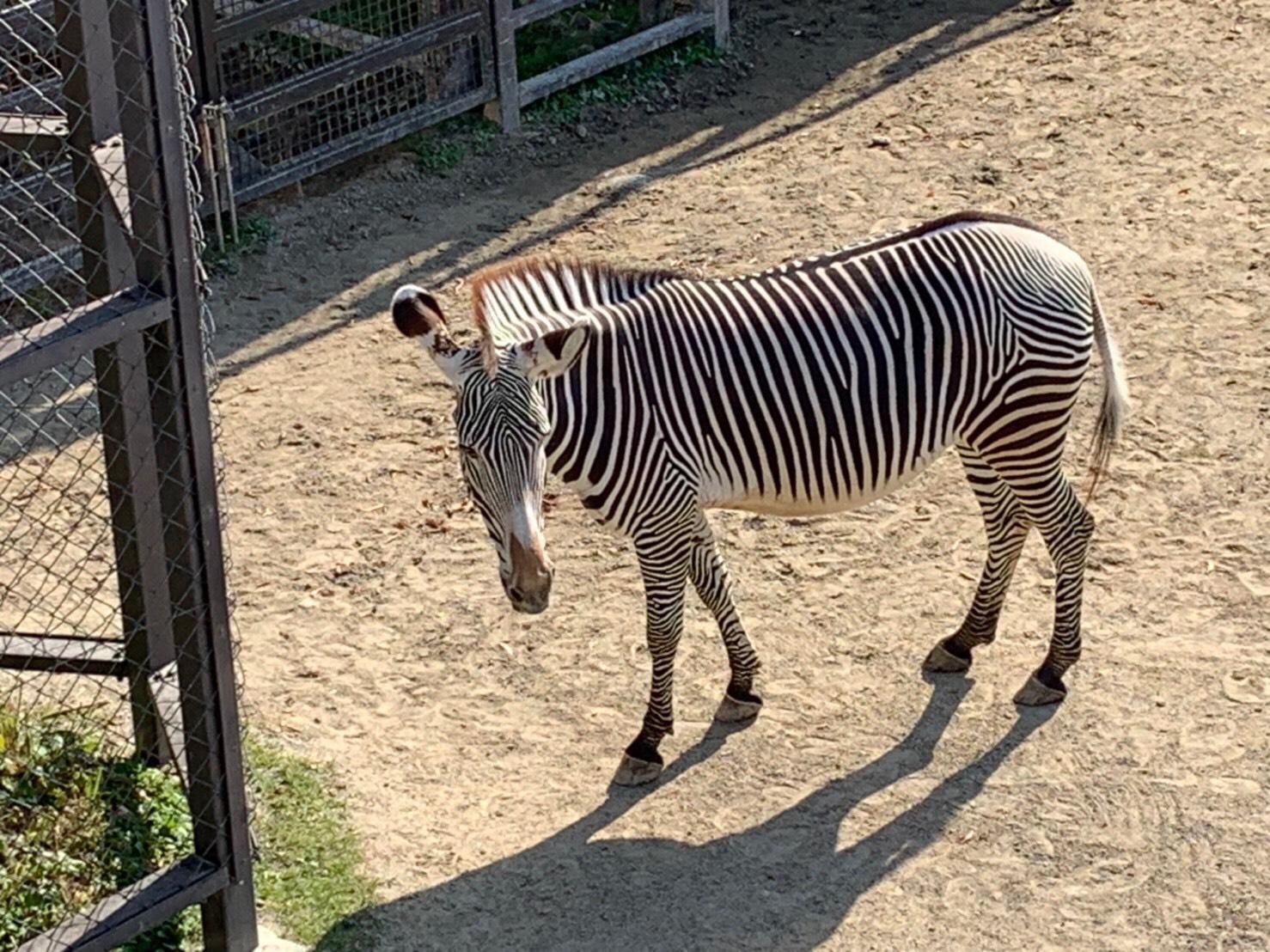 京都市動物園に行ってきました♪🐵