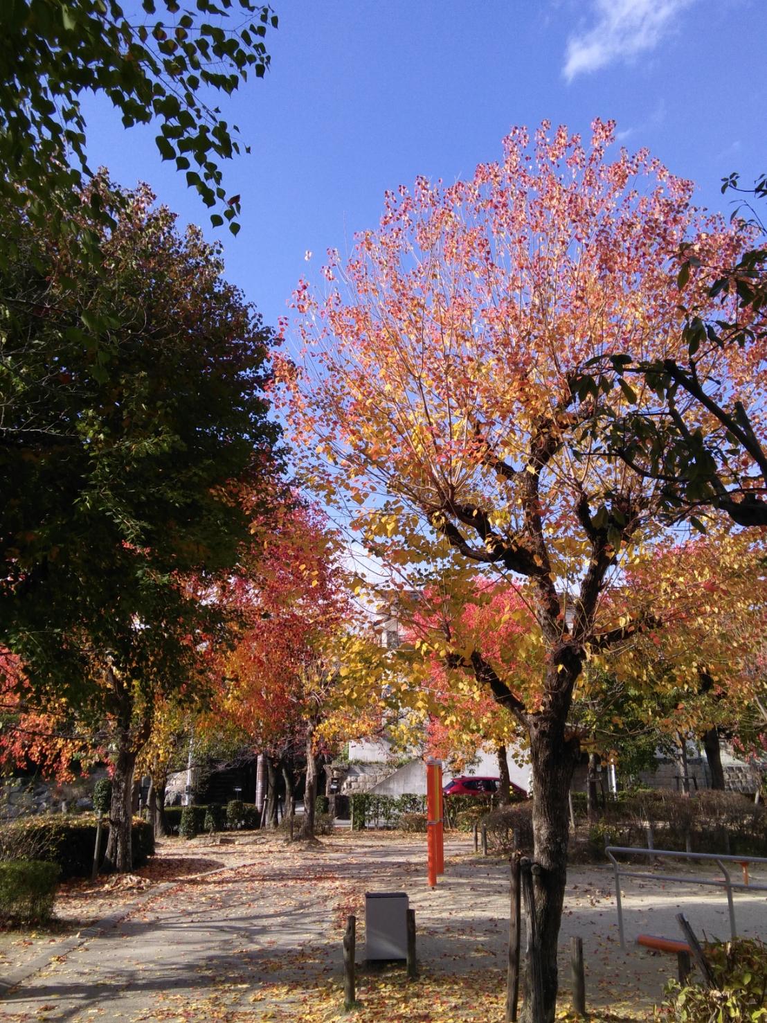 11/19(木) 翠香園ふれあい公園 ~Vol.2~